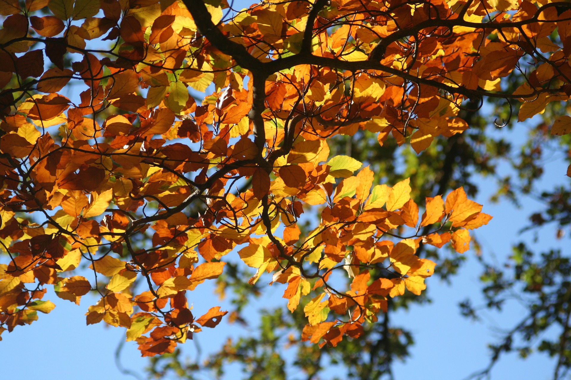 Le Mas du Grand Jonquier en automne